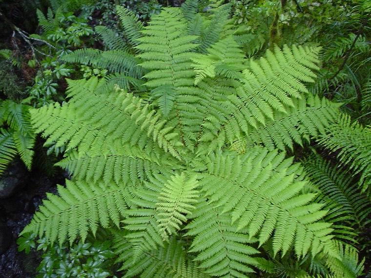 Le piante for Piante a foglia larga da esterno